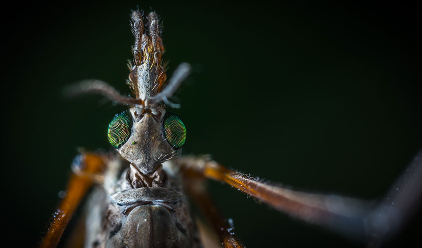 estinzione delle zanzare