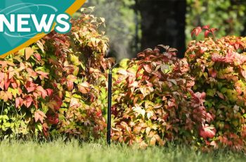 sistemi antinzanzare da giardino